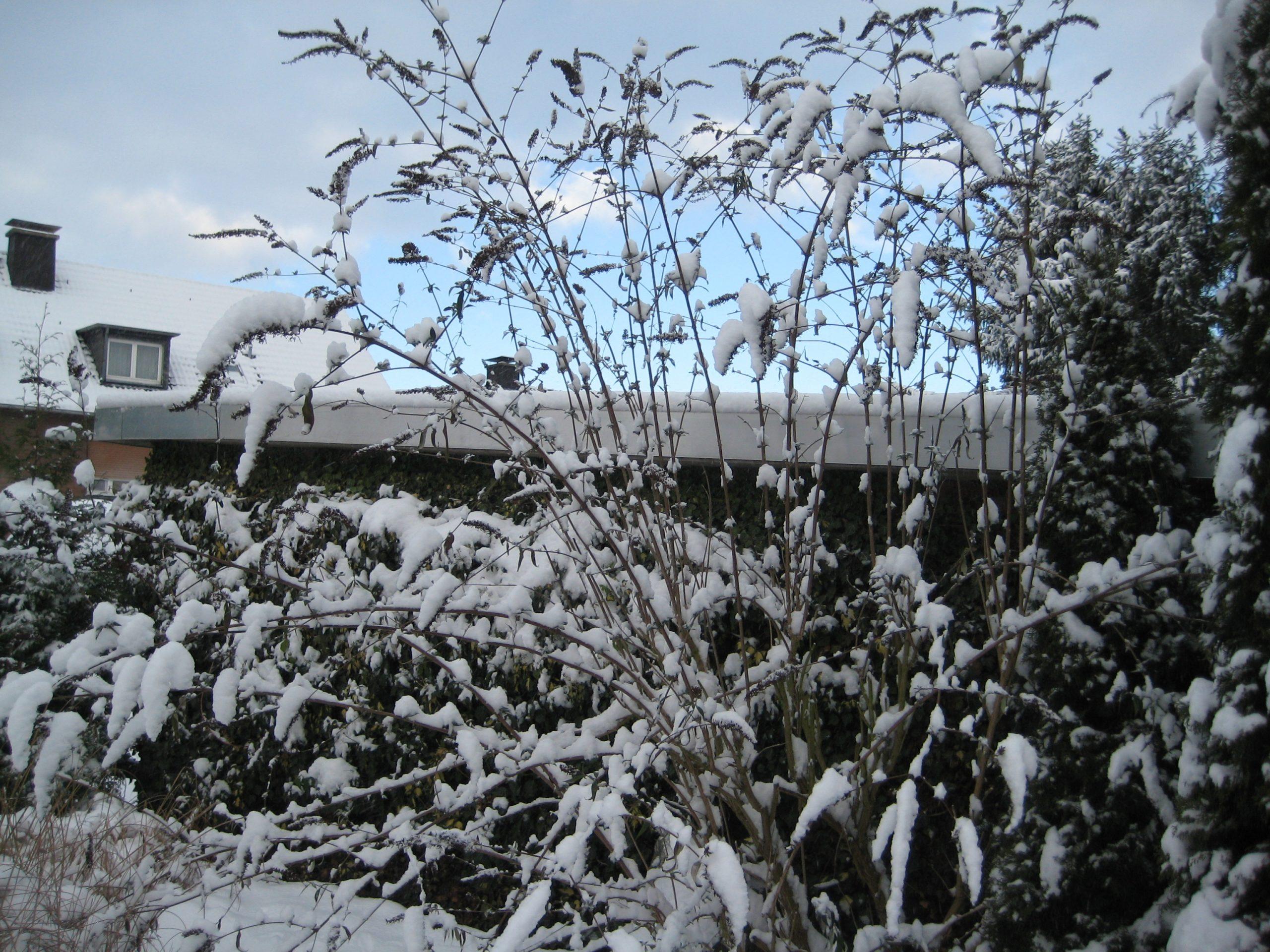Schnee 03