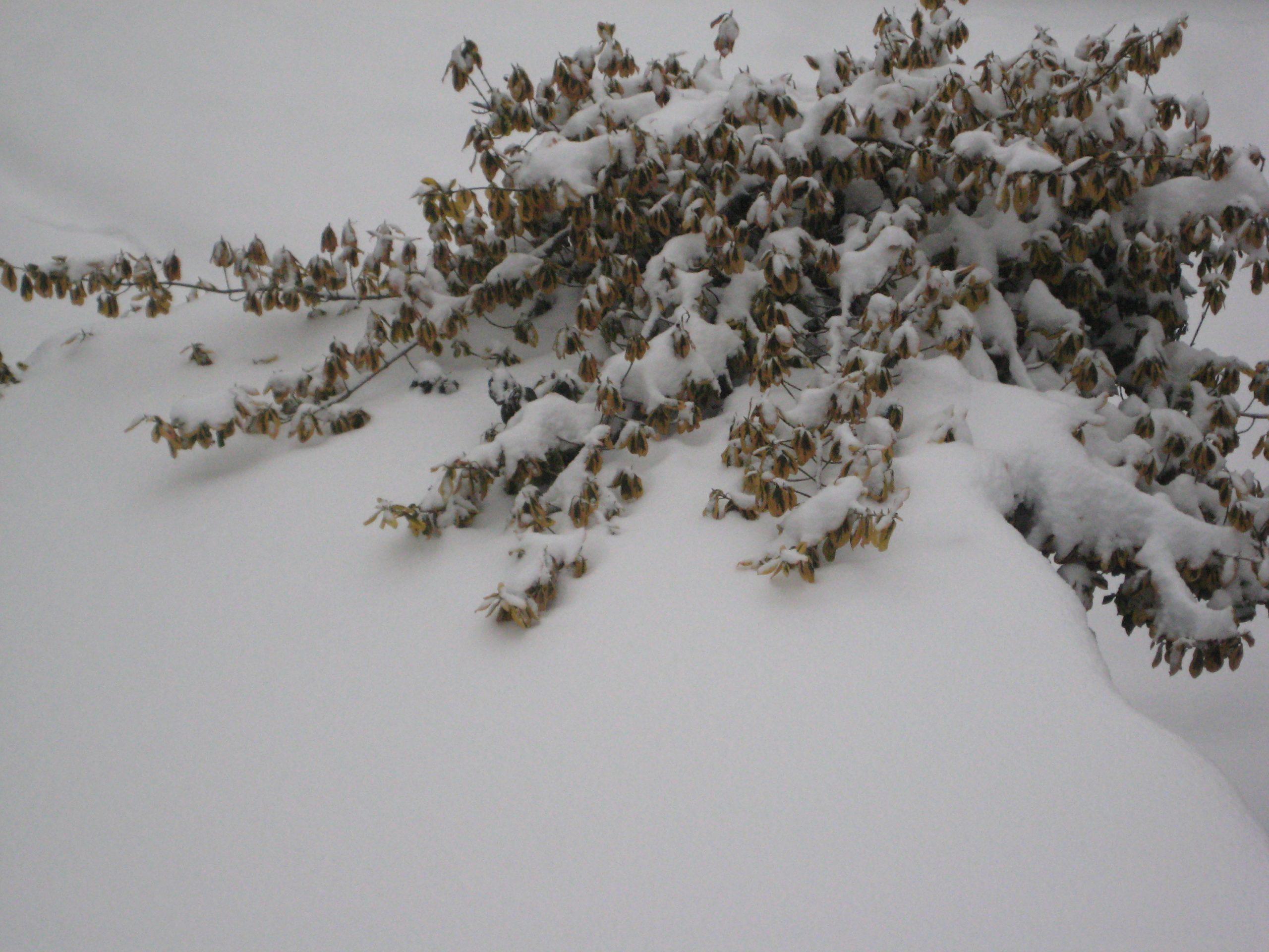 Schnee 05
