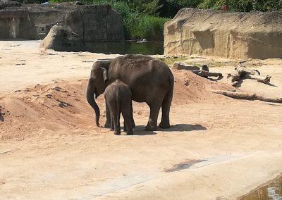15 Galerie 1 Zoo