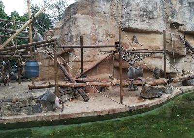 16 Galerie 1 Zoo