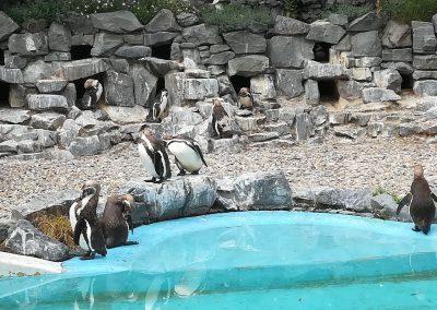 17 Galerie 1 Zoo