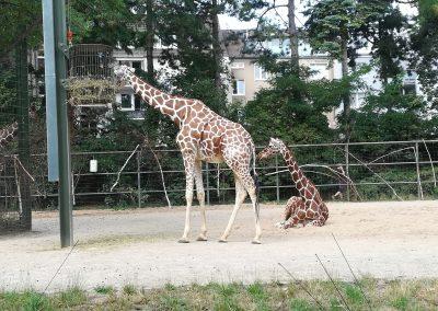 18 Galerie 1 Zoo